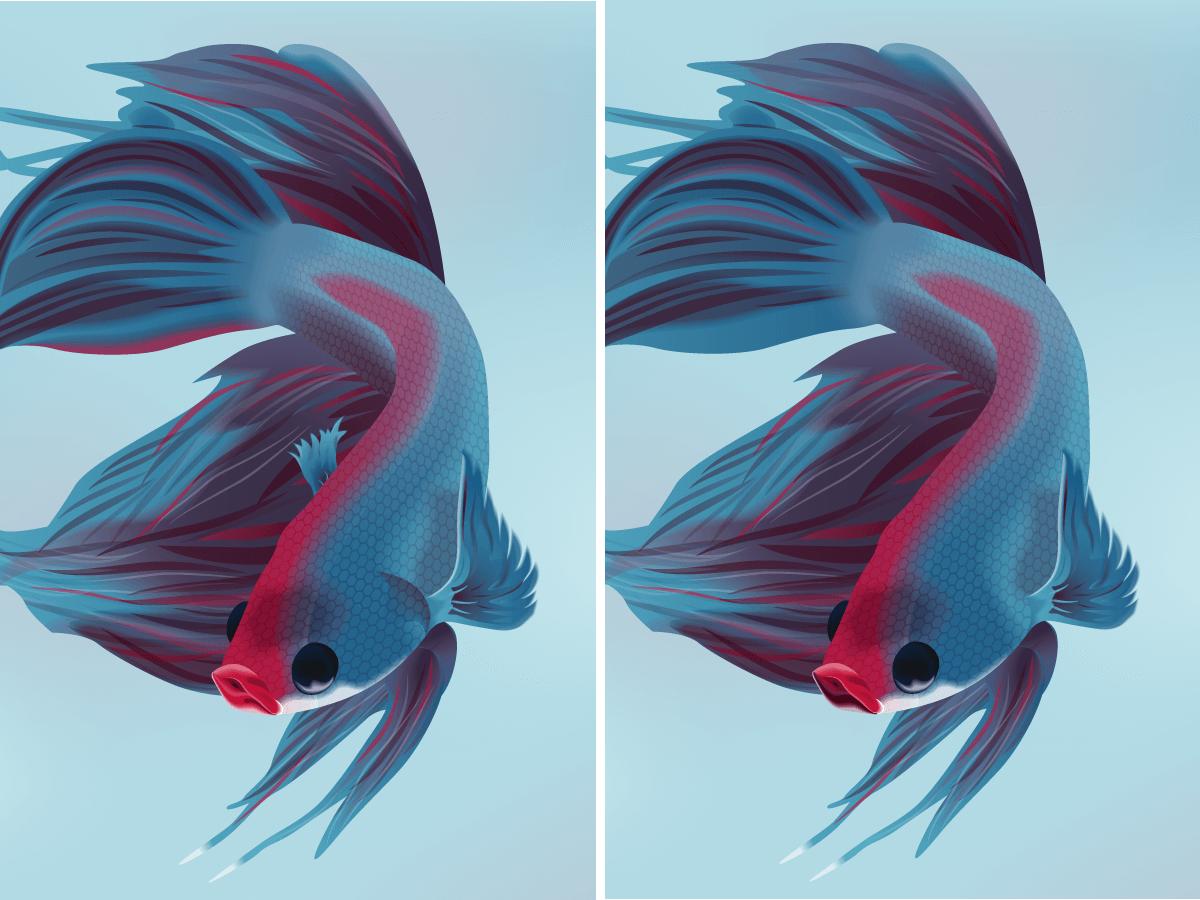 Adventskalender 2017 Vergleich Kampffisch