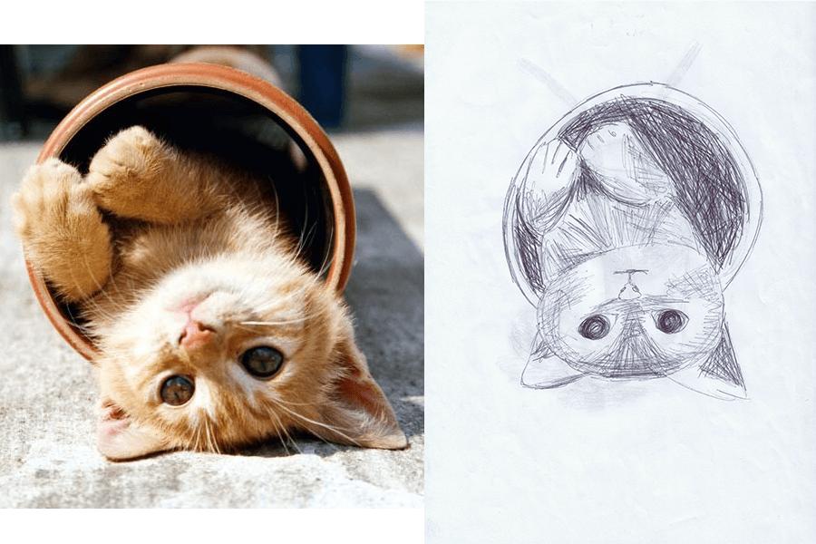 5-Minuten-Bilder Katze